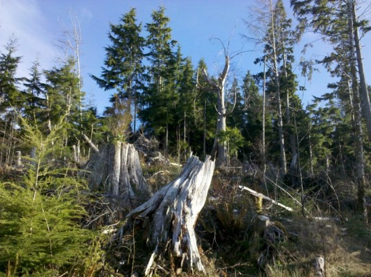 Clearwater Creek SE corner with LWD and big snag
