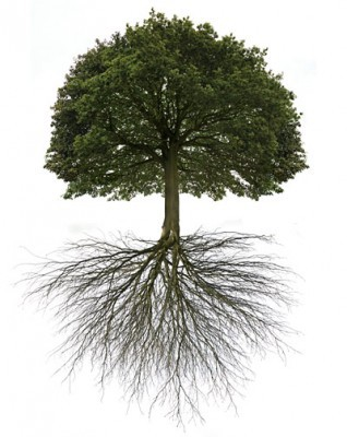tree_with_roots