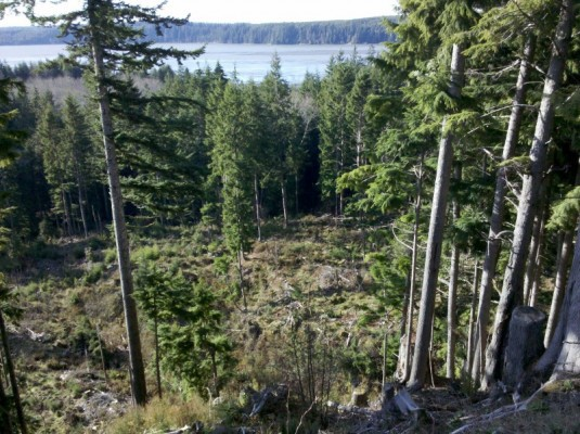 Clearcut opening in NW corner of CC