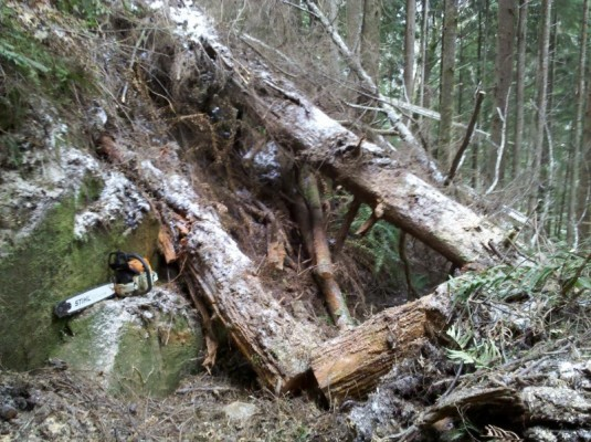 Big timber on the Eastern Hill at Clearwater Creek