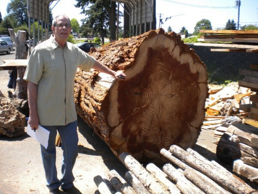 35 year-old redwood in Willamette Valley, OR.