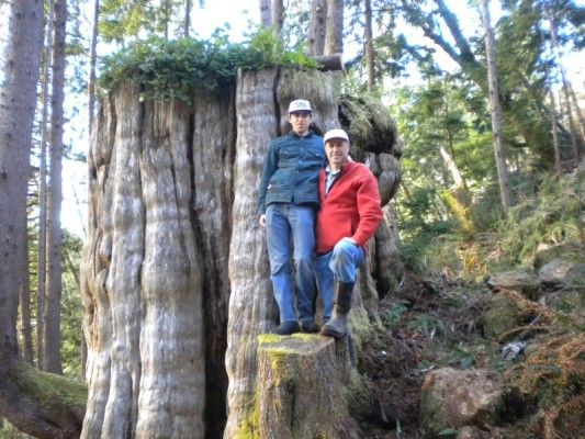 Old Growth Western Red Cedar Stump at Clearwater Creek - Naselle, WA