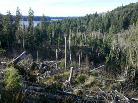 Clearcut in South Side unit #4, looking NW towards the bay